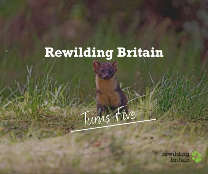 Rewilding Britain - it's been a fantastic five years!