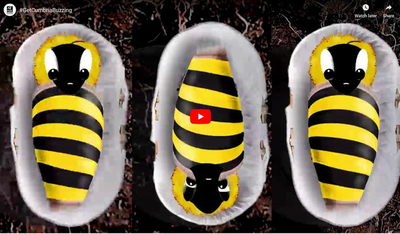 Vote To Help Bees.....Our Get Cumbria Buzzing film is shortlisted for a national award