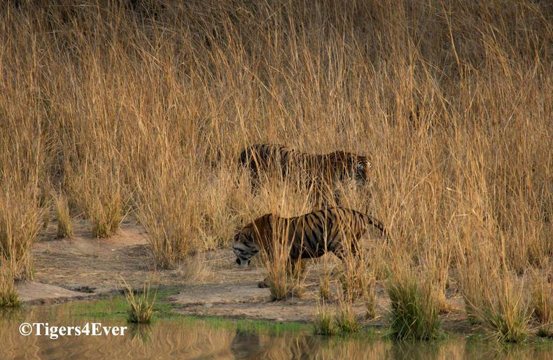 Tigers4Ever Waterhole Project