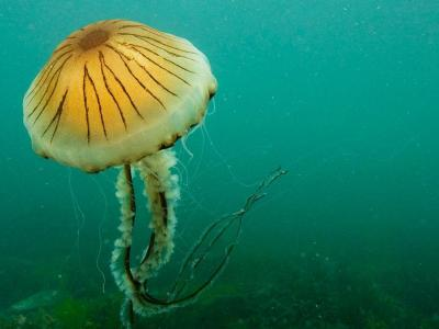 World Jellyfish Day