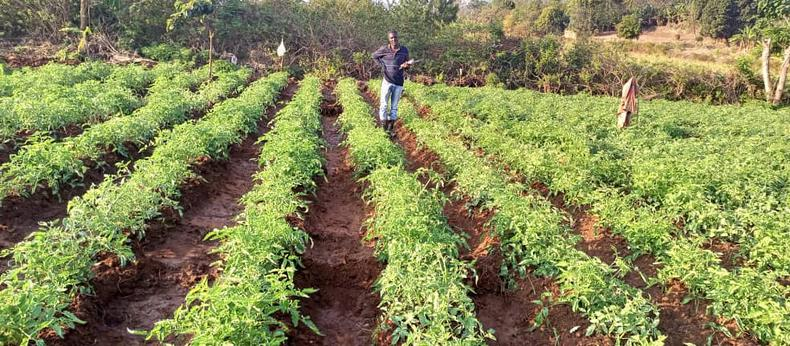 Farming your way out of poverty