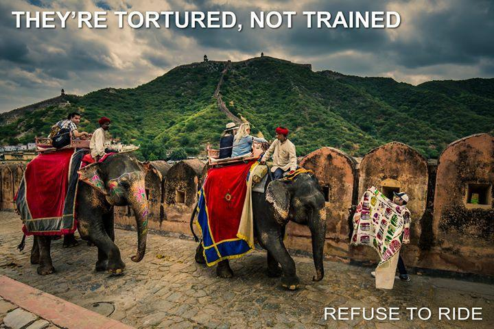 Refuse To Ride  ..... if you love elephants please don't ride them!
