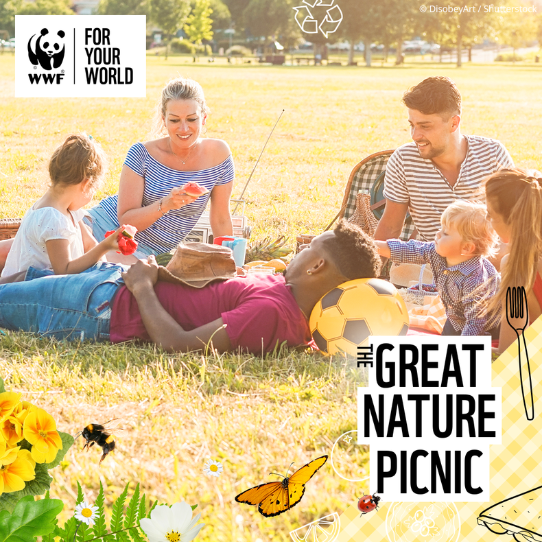 The Great Nature Picnic!
