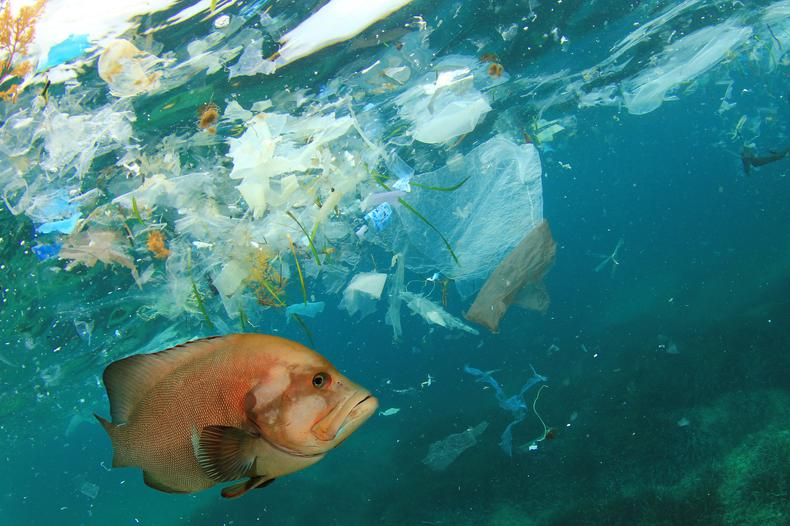Our Latest Plastic Facts and Myth-Busting