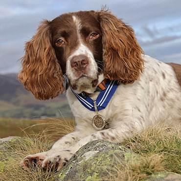 'Animal OBE' for extraordinary virtual therapy dog