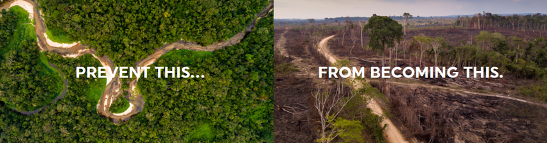 Fighting Climate Change by Protecting the World's Most Important Tropical Forests