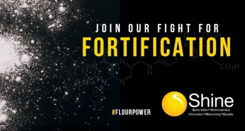 Fortification - Shine Celebrates a Step in the Right Direction