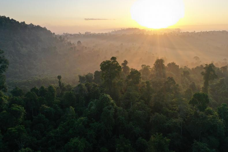 Rainforest Trust 2020: A Year in Review