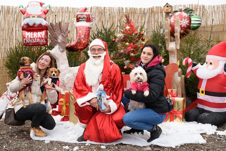 Sunday's Christmas open day at the city pound