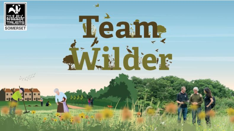 Wilder Somerset 2030 - our exciting new 10 year plan!