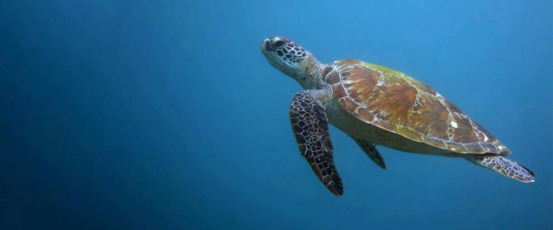 Why Do Sea Turtles Matter?