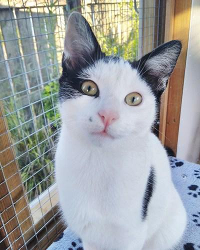 Kitten rescued from bus depot and given apt new name