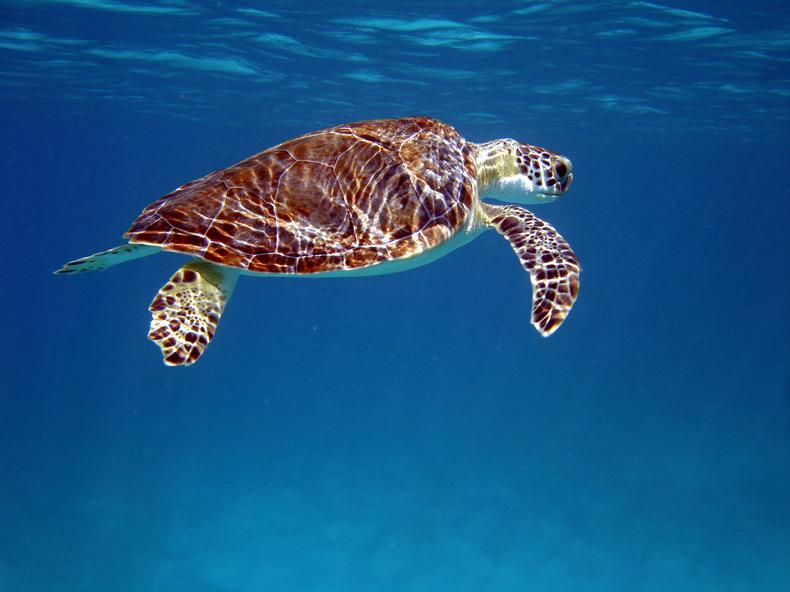 How well do you know your sea turtles?