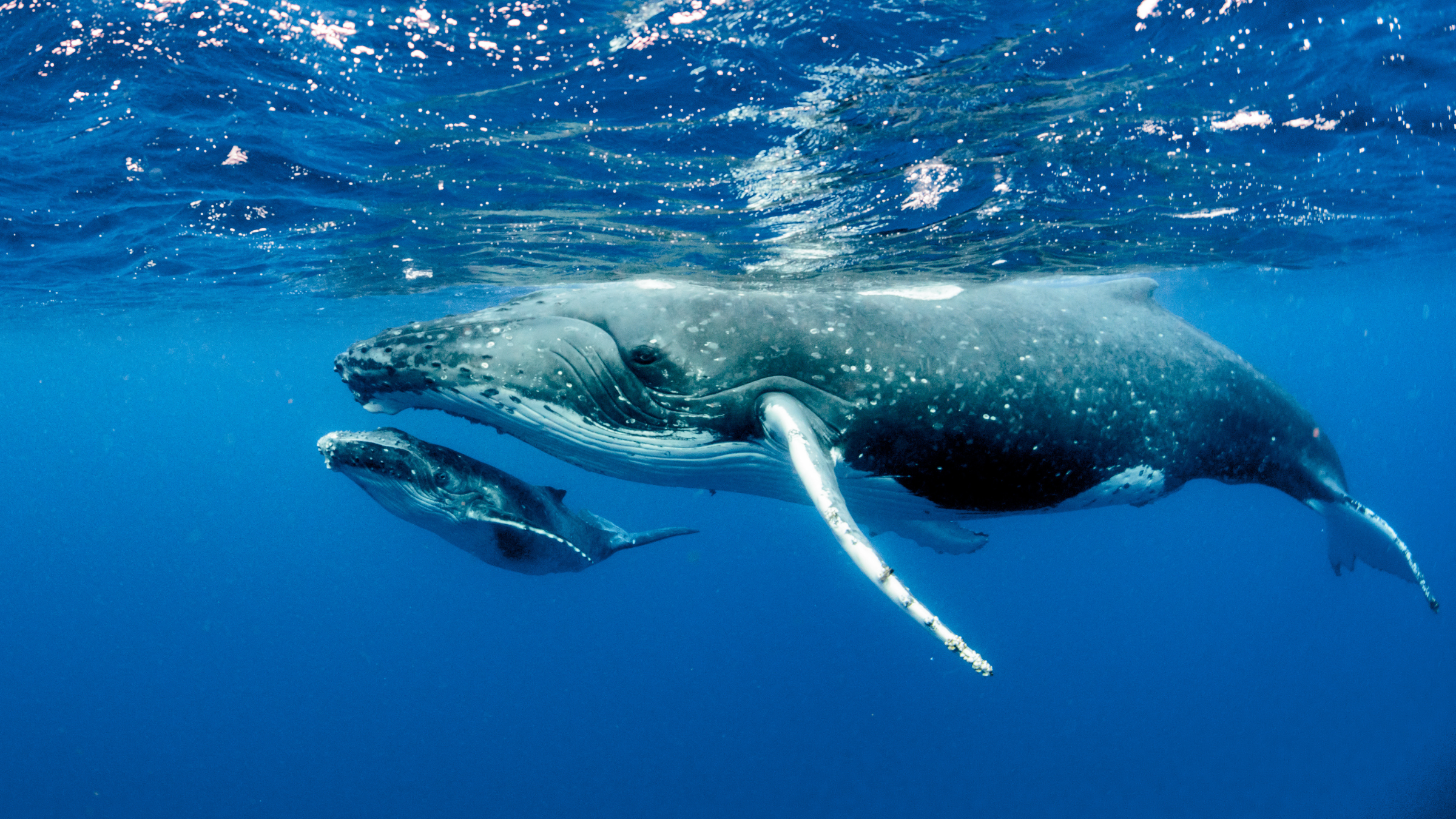 Plastic Free July - whales