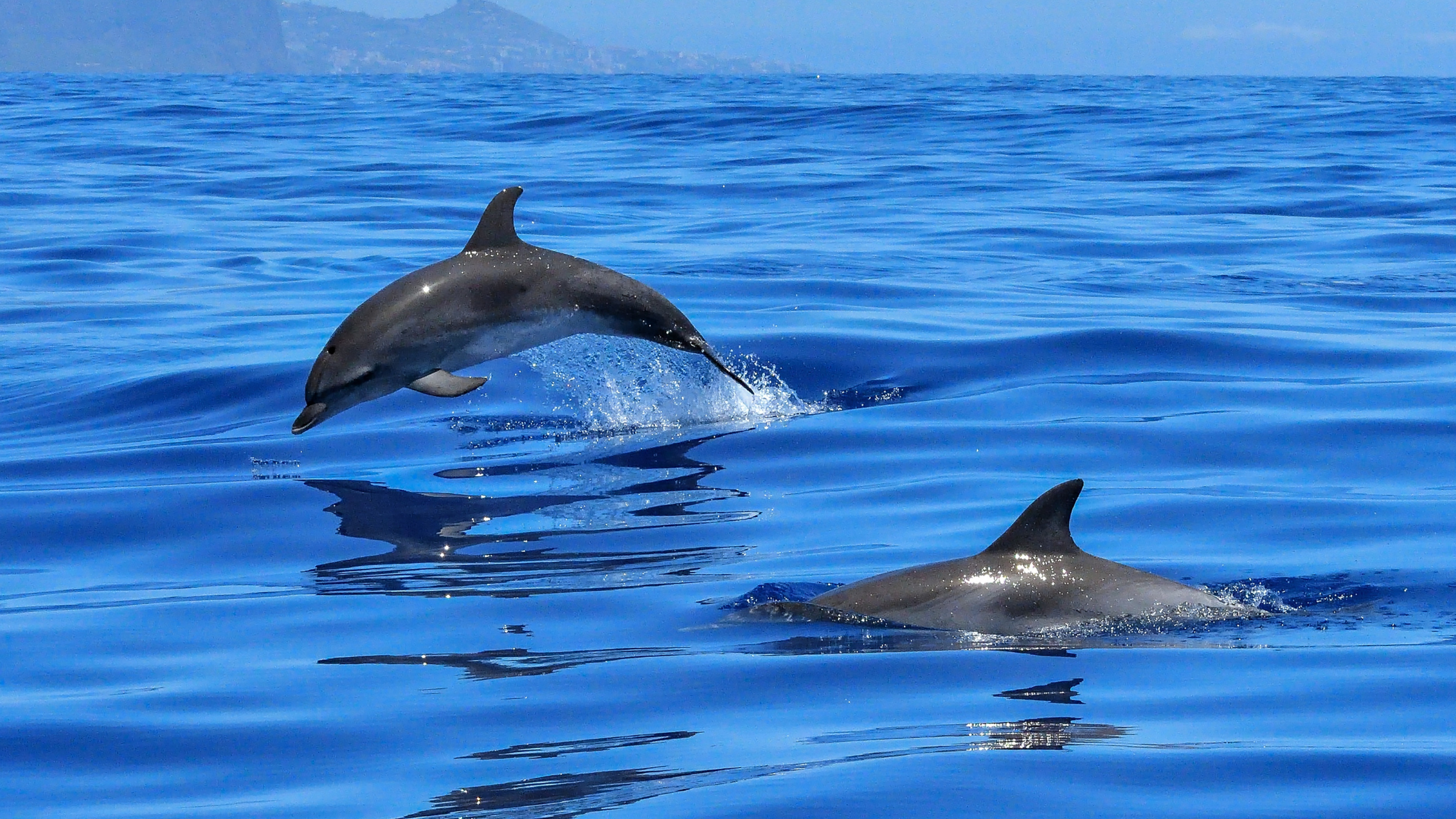 Plastic Free July - Dolphins